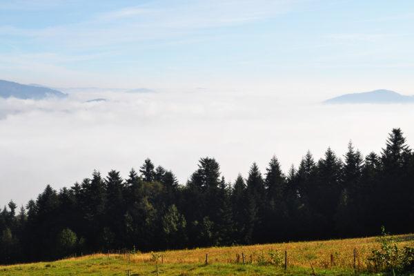Mgły nad Łososiną Górną